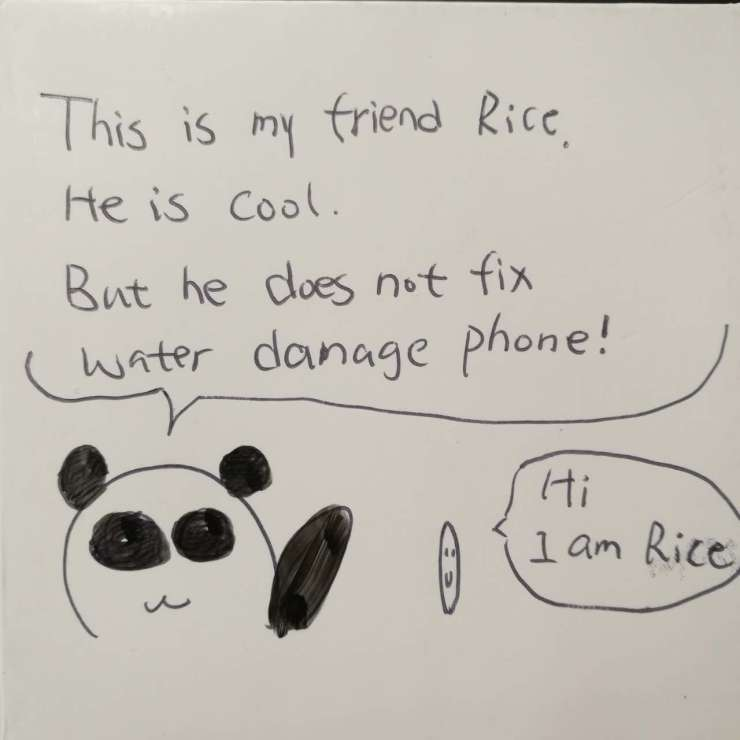 water damaged and rice